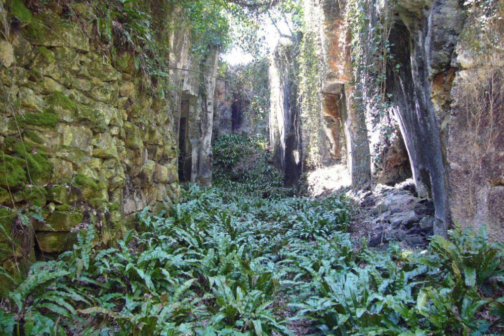 Gorge étroite colonisée par des fougères scolopendres